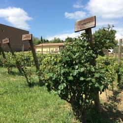 Wine Link Italy - Barbara D'Agapiti