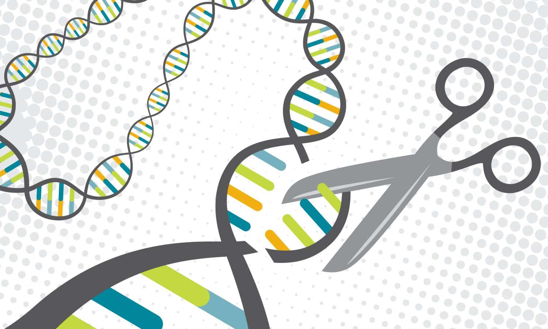 gene edit