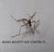 Aedes voy contra ti