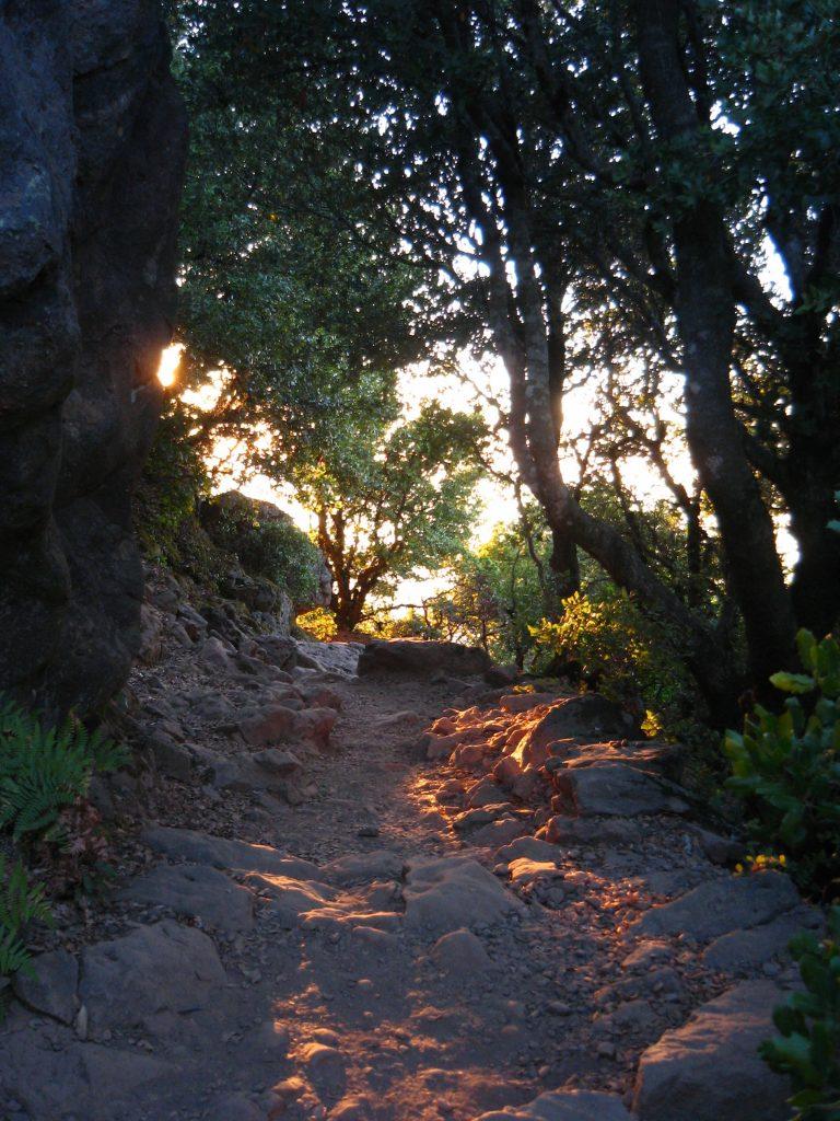 Filter-lit Path