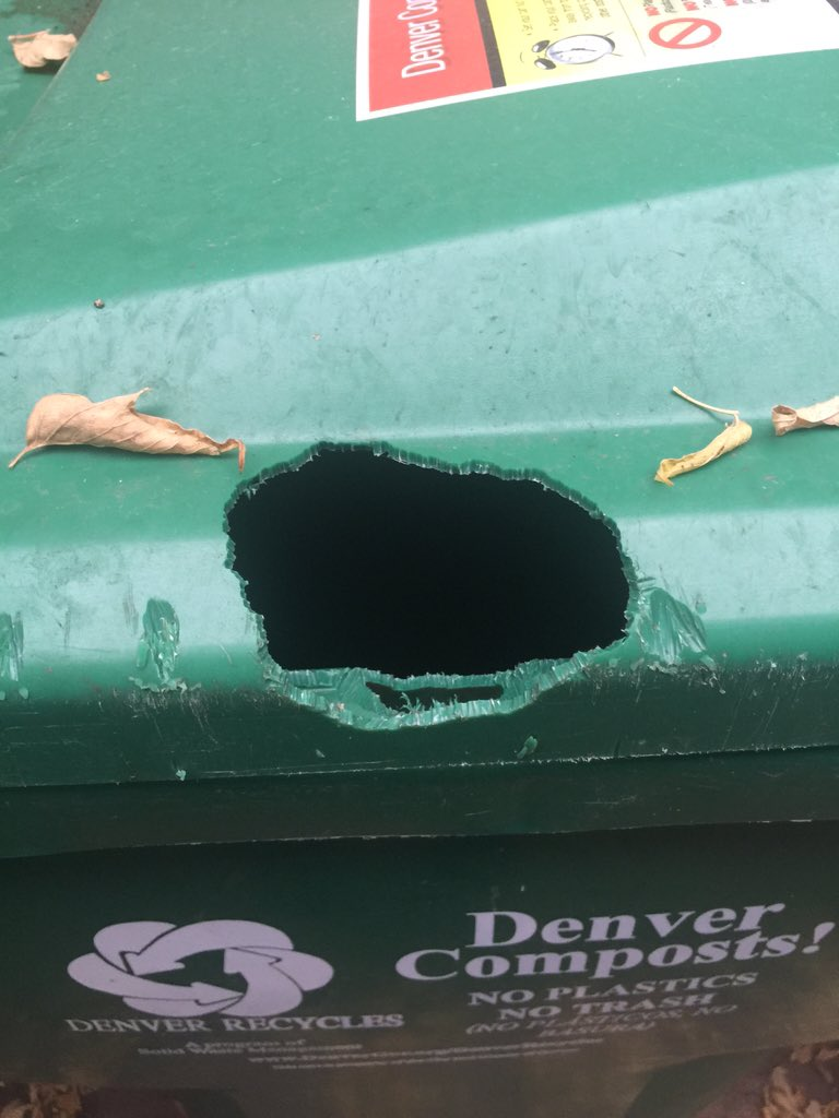 Apparently Denver squirrels have jaws…