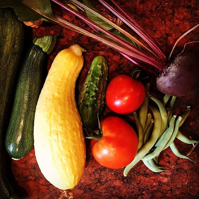 Still life of garden harvest. #vegetablegarden #harvest #zucchini #squash #summersquash #cucumber #tomatoes #beetroot