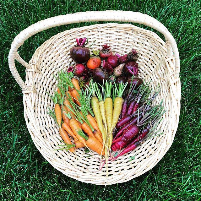 Today's harvest! #carrots #beets #veggiegarden #gardening #inmygarden