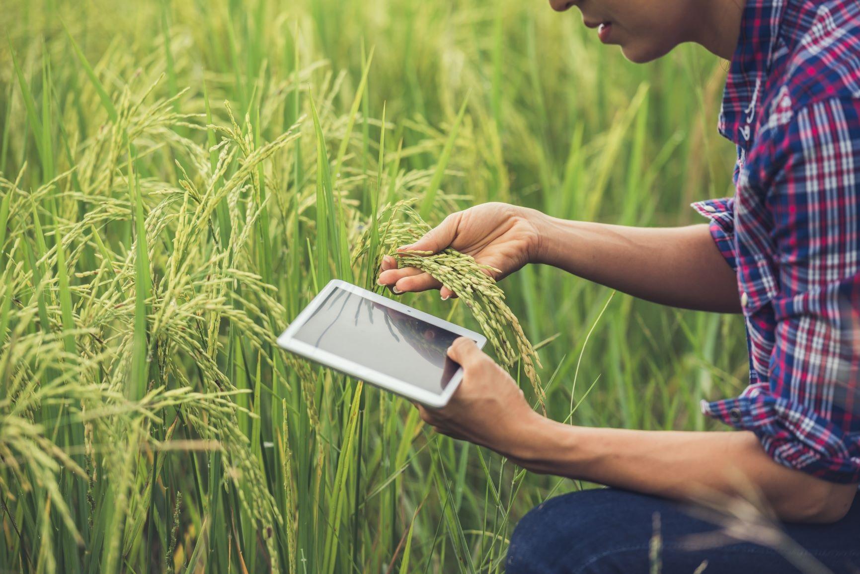 Cooperativas buscam o apoio de startups para solucionar os desafios do agronegócio.