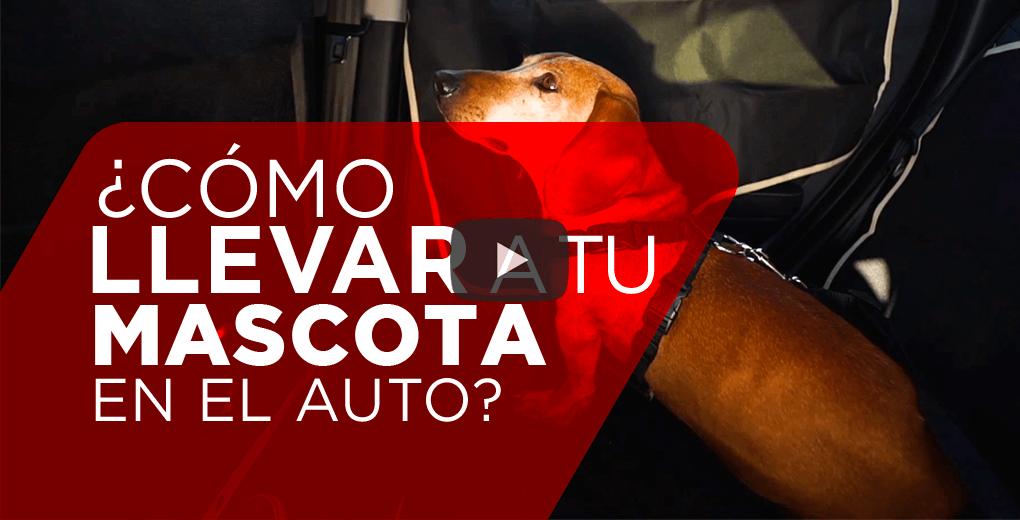 ¿Cómo llevar a tu perro de forma correcta en el auto?