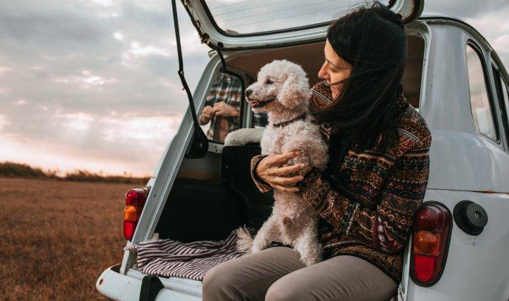 ¿Cómo se debe transportar un perro en el auto?
