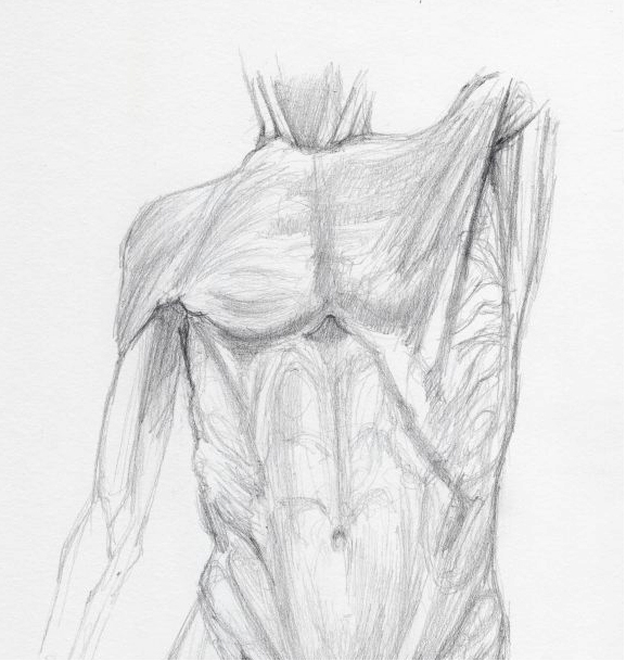 Using Derwent Precision For Anatomical Drawings By Adele Wagstaff