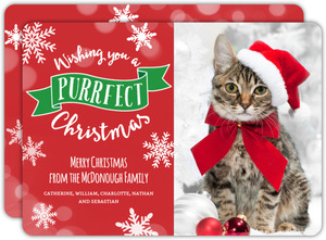 Purrfect Cat Christmas Photo Card