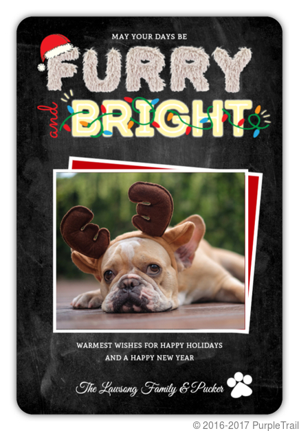 furry bright typography pet photo holiday card - Pet Holiday Cards