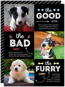 Good, Bad & Furry Pet Holiday Photo Card