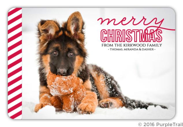 Dog Christmas Cards.Simple Red Stripes Dog Christmas Photo Card