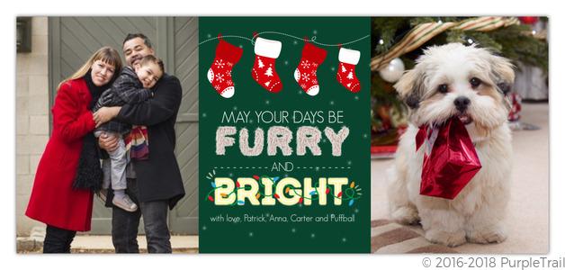 Family Christmas Stockings.Family Christmas Stockings Pet Holiday Photo Card