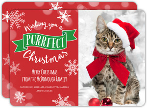 Purrfect Christmas Cat Photo Card