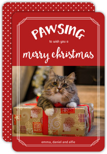 Pawsing this Christmas Cat Photo Card