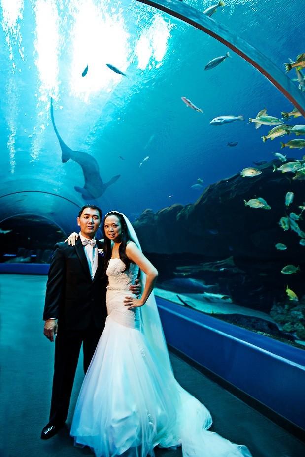 Unique Wedding Ideas: Aquarium Venues, Photos, Invitations ...