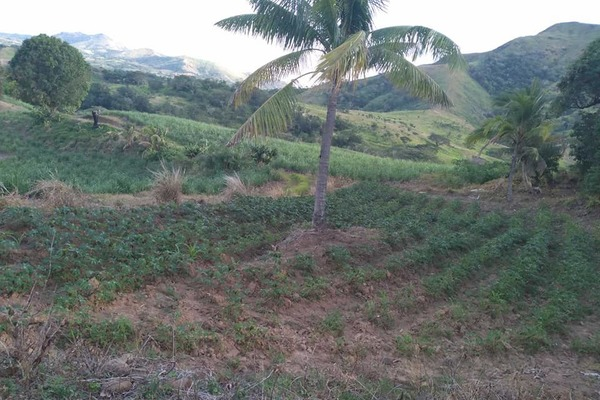 Freehold farmland with house for sale