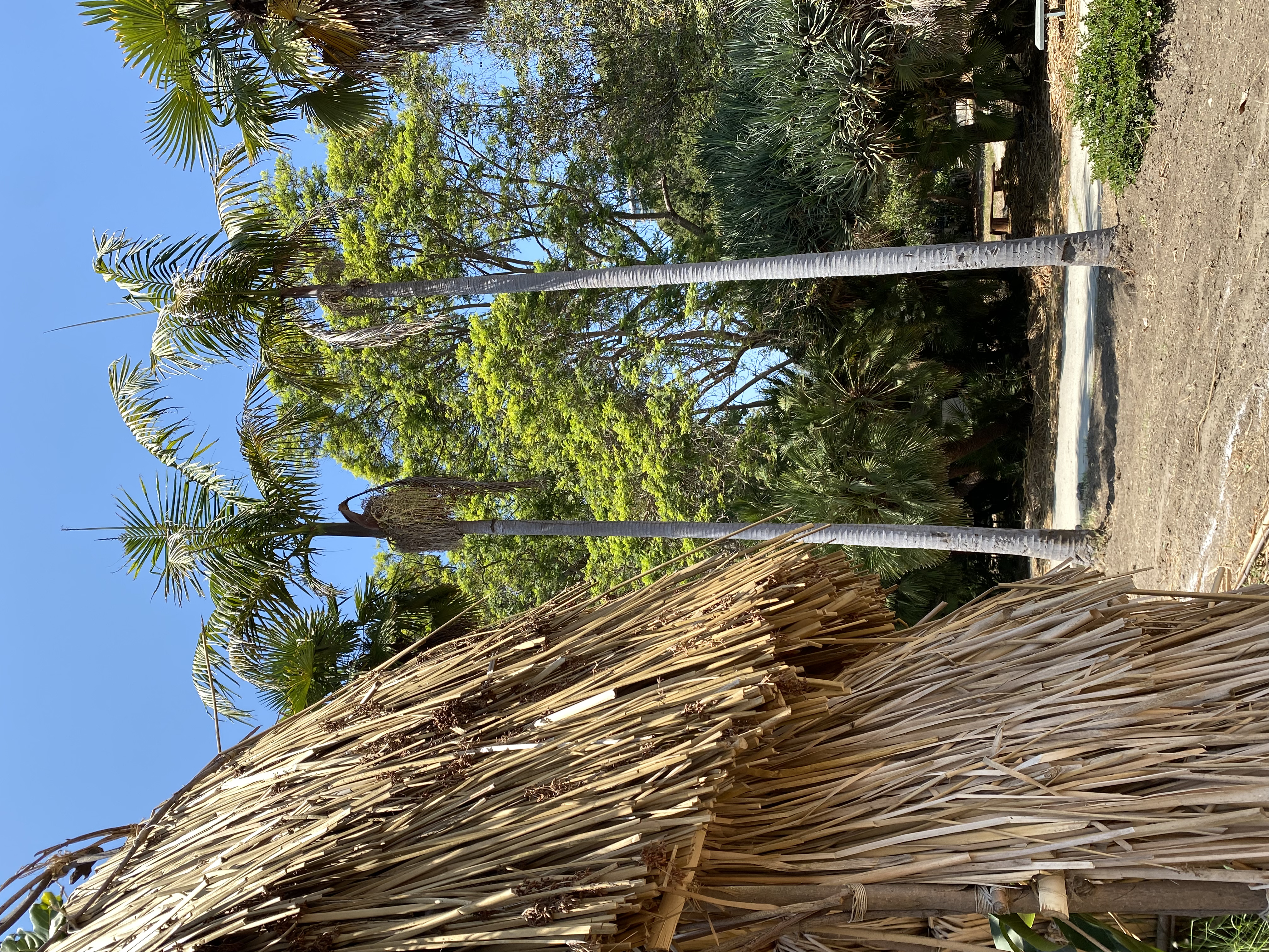Archive of Healing Receives Grant to Support Indigenous Tongva Wellness
