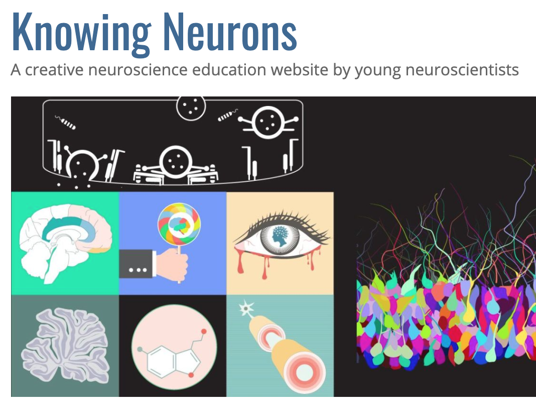 Making neuroscience accessible to the Spanish-speaking audience