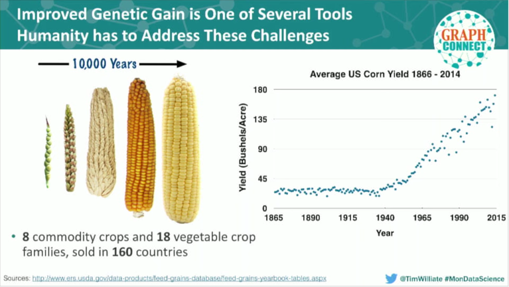 The improved genetic gain of corn over many years