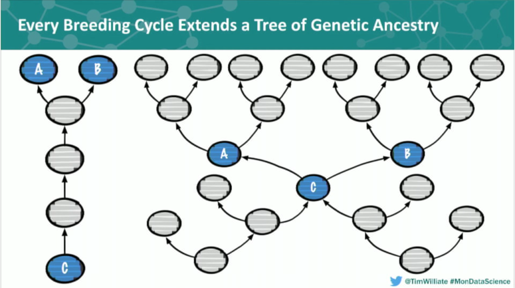 A diagram of a genetic cross in a breeding cycle