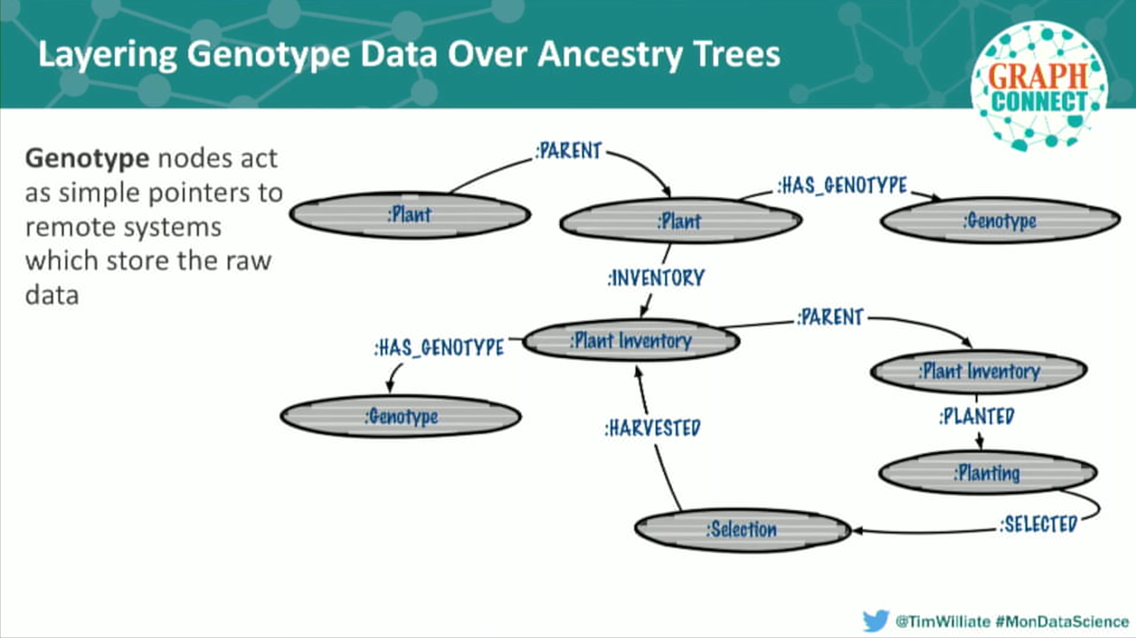 Layering genotype data over ancestry data trees