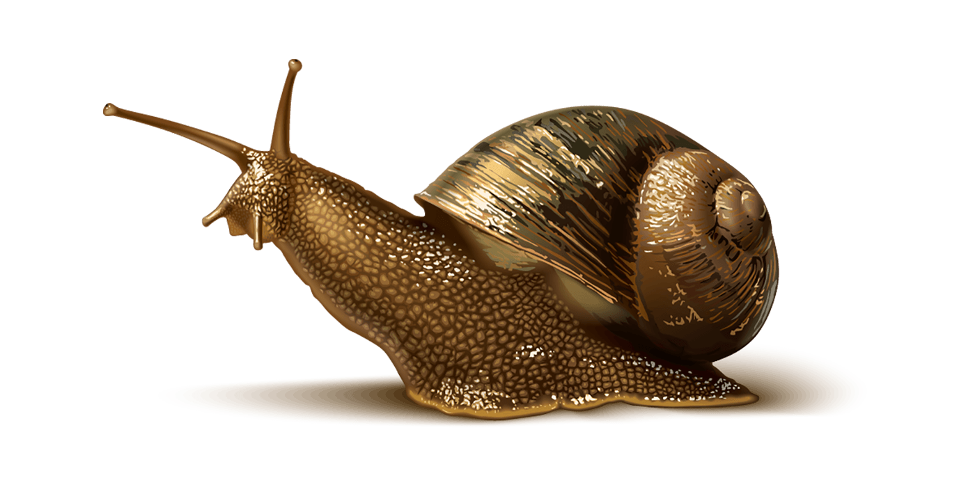 Slug Image