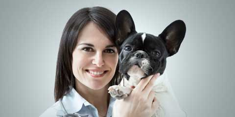 Pet Sitting Astra Starter Site - For pet sitting experts