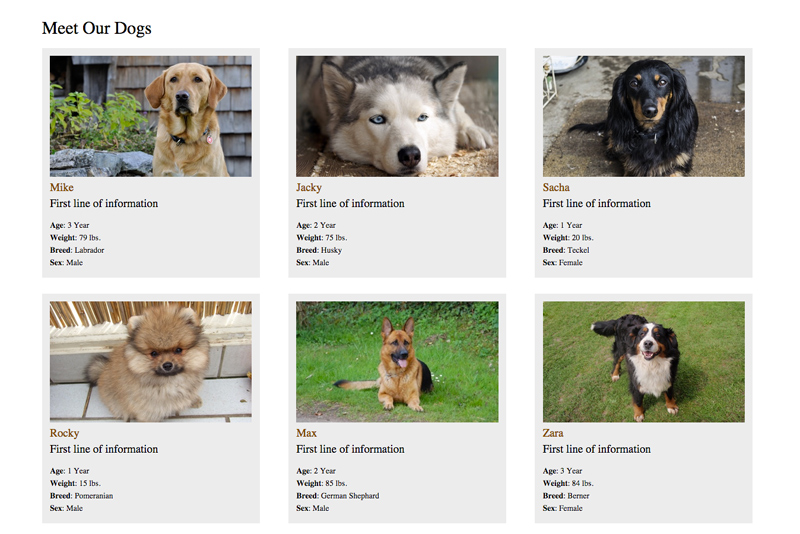 Animal Shelter WordPress Theme - Overview of adoptable pets