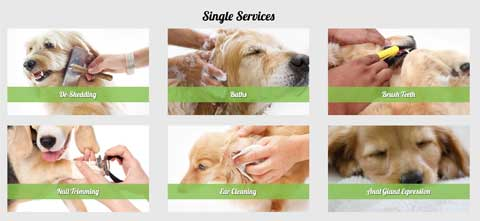 Dog Grooming WordPress Theme - Services
