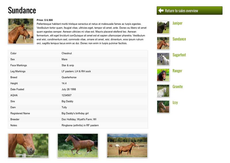 Horse Riding WordPress Theme - Appealing service pages