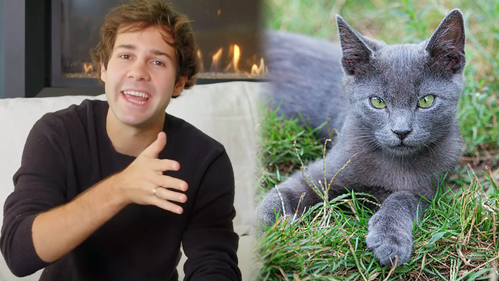 David Dobrik talks to the camera beside a photo of a Russian Blue kitten.