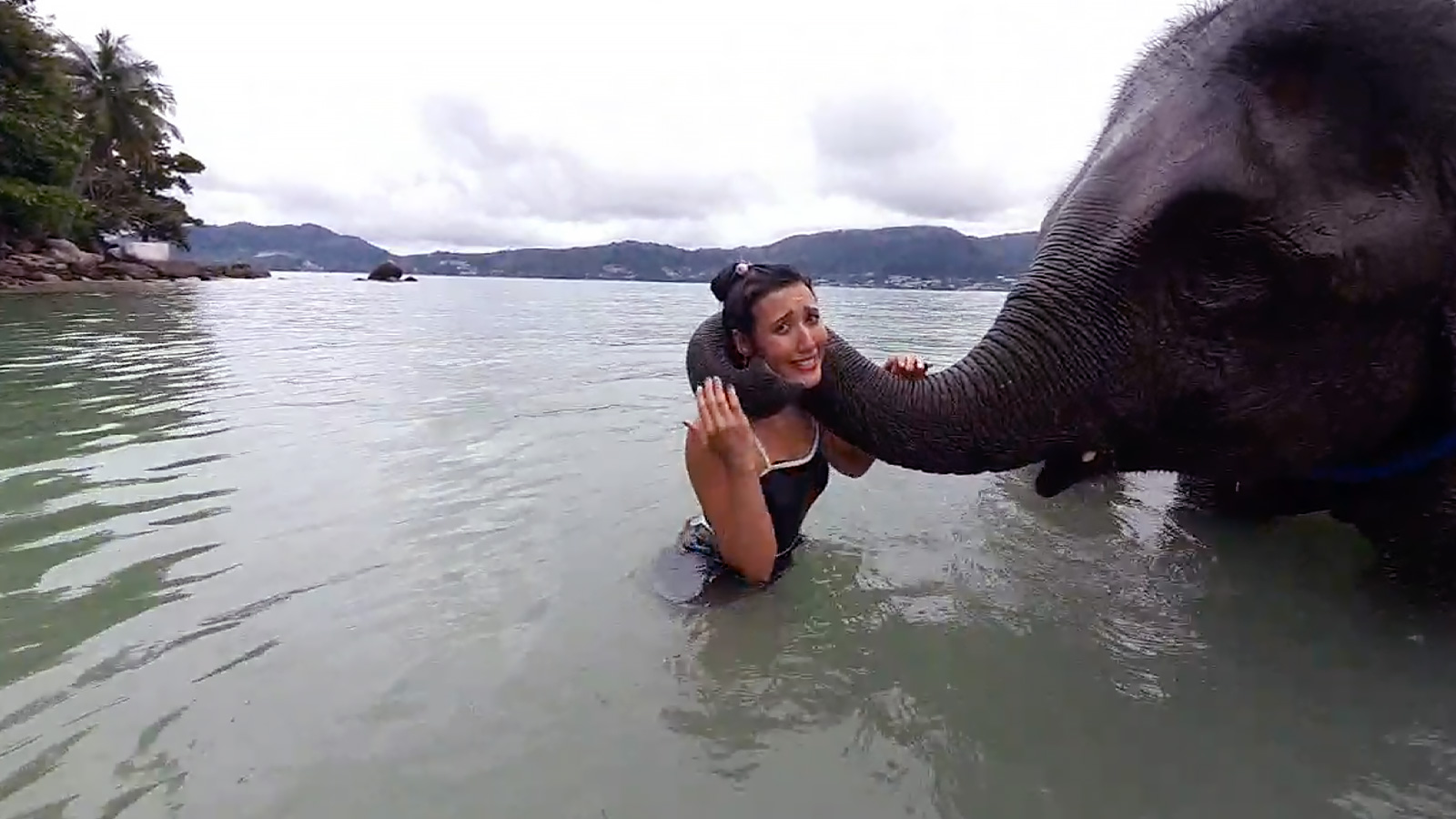 irl streamer with elephant