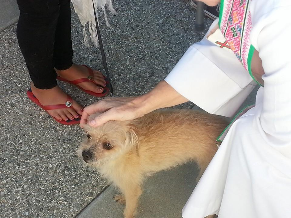 Blessing of the Animals   Saint Mark's Church