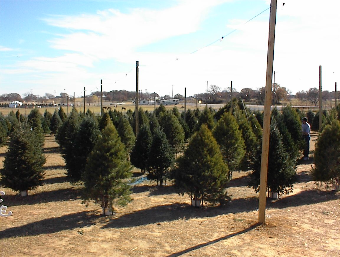 Flower Mound Christmas Trees