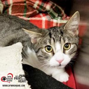 DFW Humane Society - A Nonprofit, No-Kill Animal Shelter