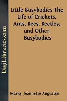 Little Busybodies The Life of Crickets, Ants, Bees, Beetles, and Other Busybodies