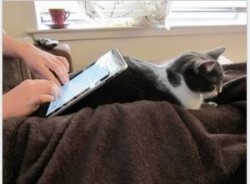 Man with cat in lap working on a tablet