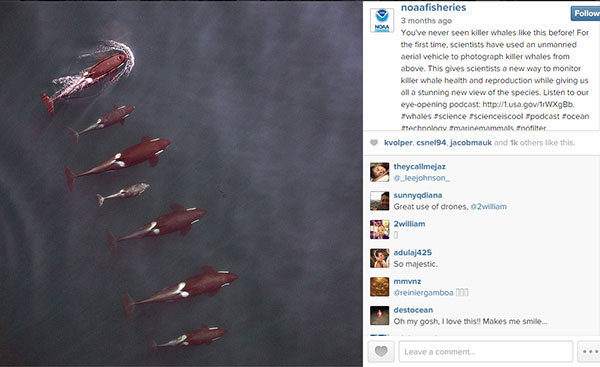 600 x 367 NOAA fisheries Killer Whales on Instagram