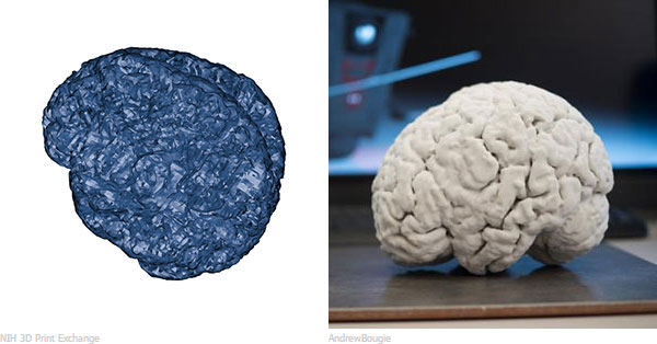 NIH 3D Print Exchange 3D model and Andrew Bougie Full Brain Side view printed on ProJet 660