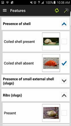 Screencapture from the Terrestrial Mollusc Key app Features screen