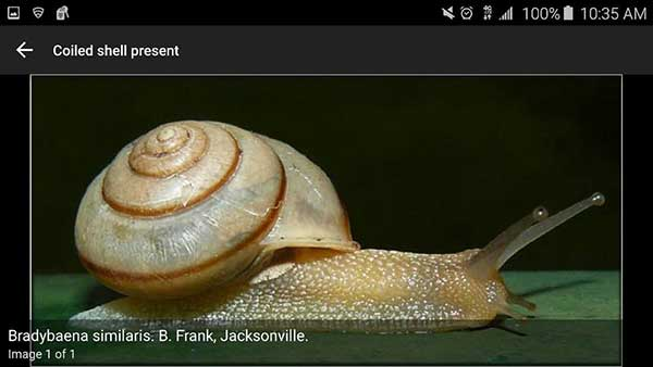 Screencapture from the Terrestrial Mollusc Key app, a snail