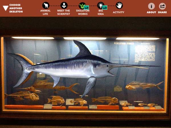 A screen showing a swordfish and smaller fish skeletons from the Smithsonian Skin and Bones iPad app