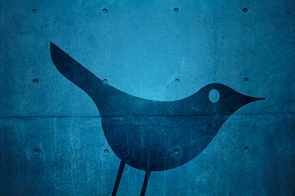 Blue bird graphic on a blue concrete background