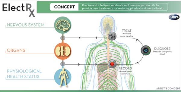Concept diagram of DARPA's Electrical Prescriptions (Elect R x) program, precise and intelligent modulation of nerve-organ circuits to provide new treatments for restoring physical and mental health.