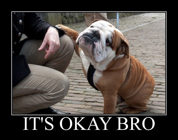 """It's okay, bro"" puppy"