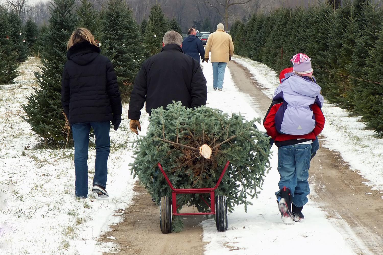 httpss3amazonawscomdigitaltrends uploads pro - Christmas Tree Shopping
