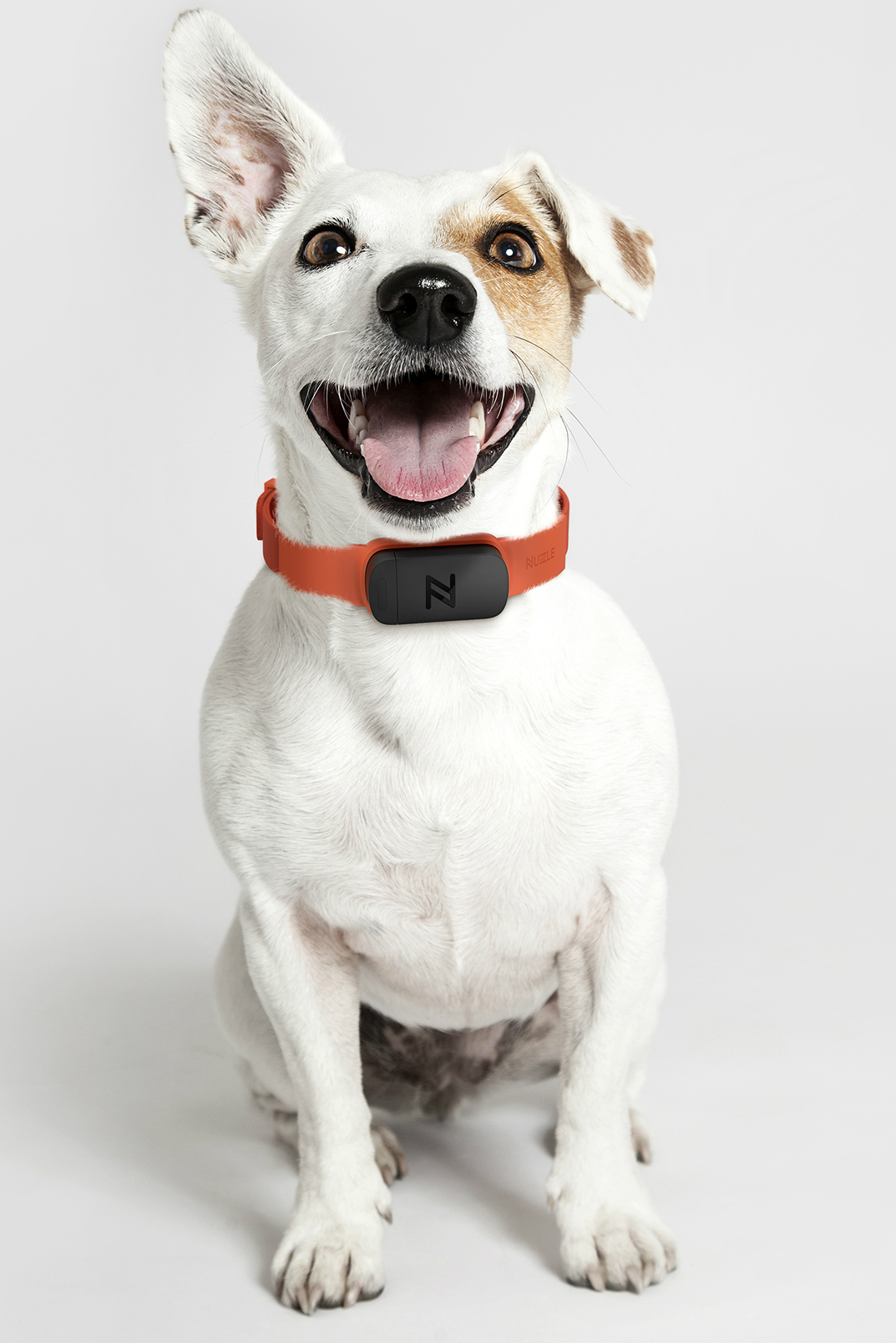 Love Your Pet  The Nuzzle Collar Keeps Tabs On Your Furry
