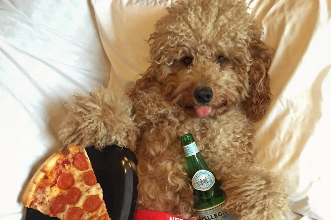 Working Like A Dog Instagram S Popular Pups Bank Up To