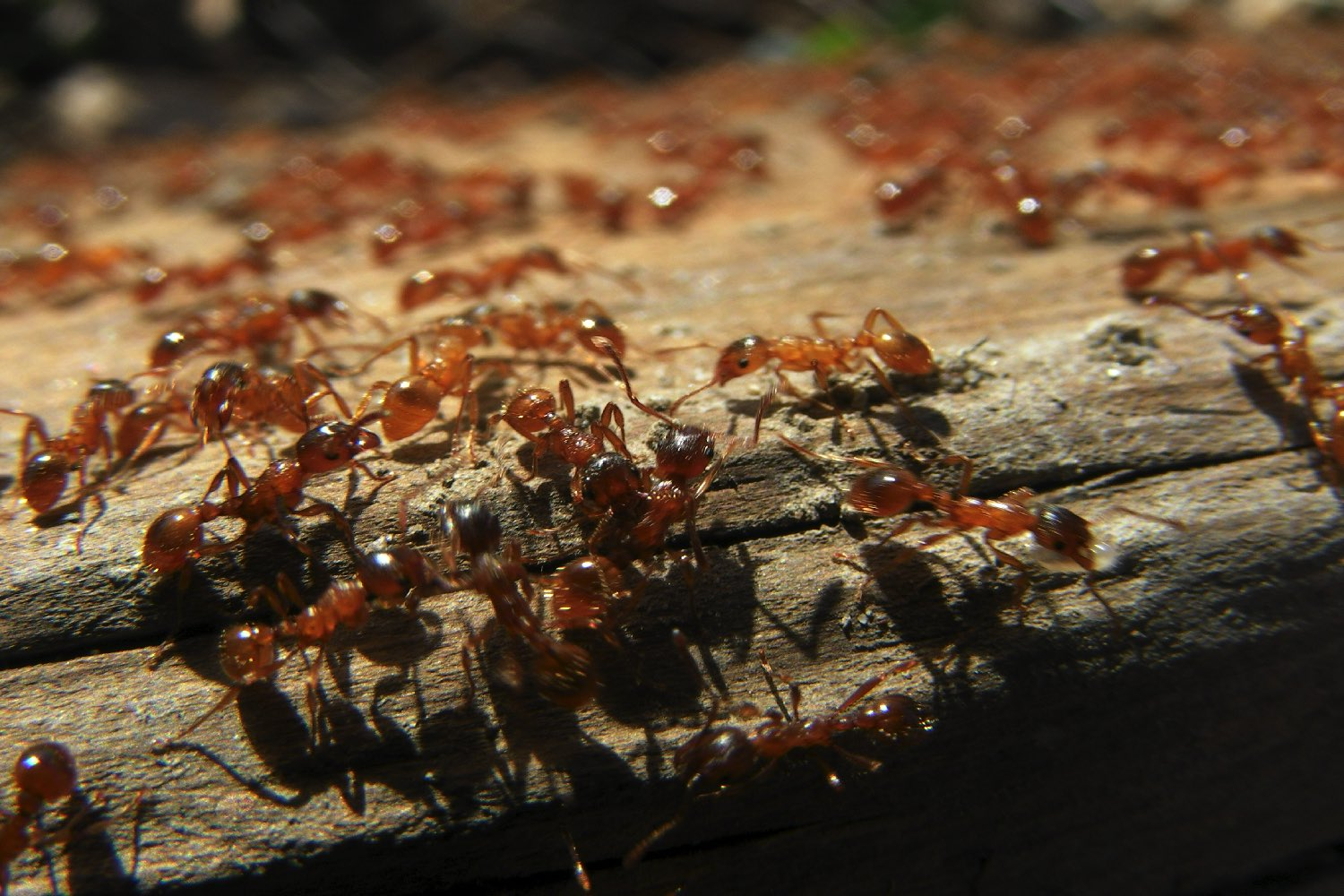 By Studying Ant Colonies Mit Devised A Totally New Way To