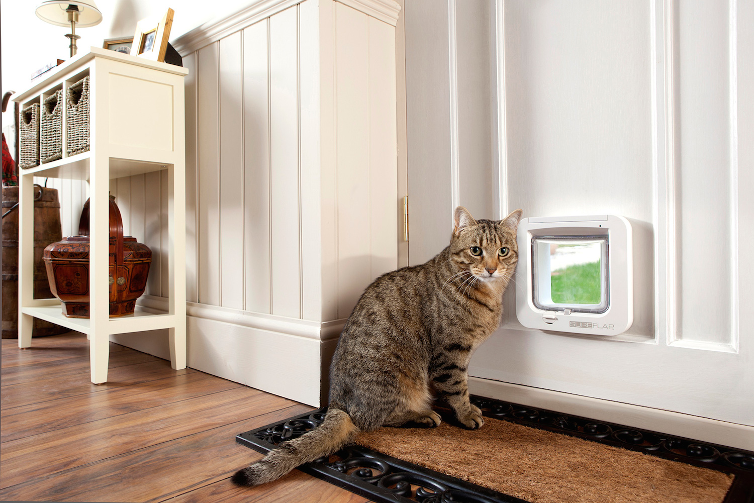 Check Out This Smart Pet Door That You Control Via Your
